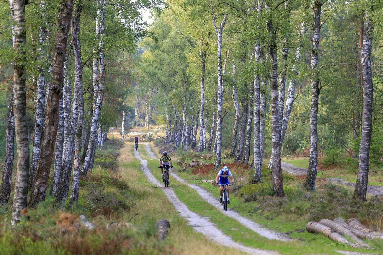 These are the most beautiful MTB trails in the Netherlands