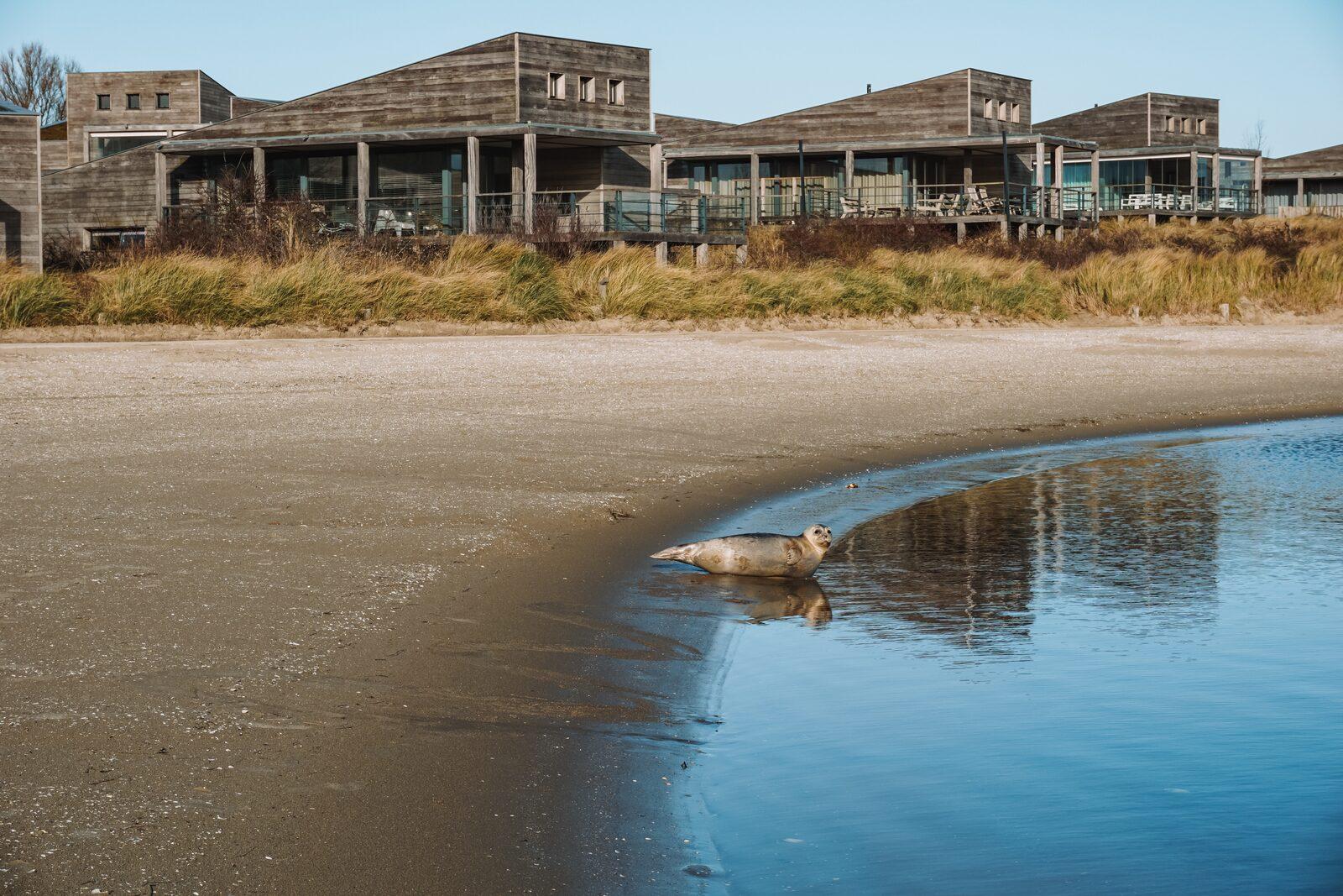 Zeehond strand Grevelingen | Reisverhaal van Daan