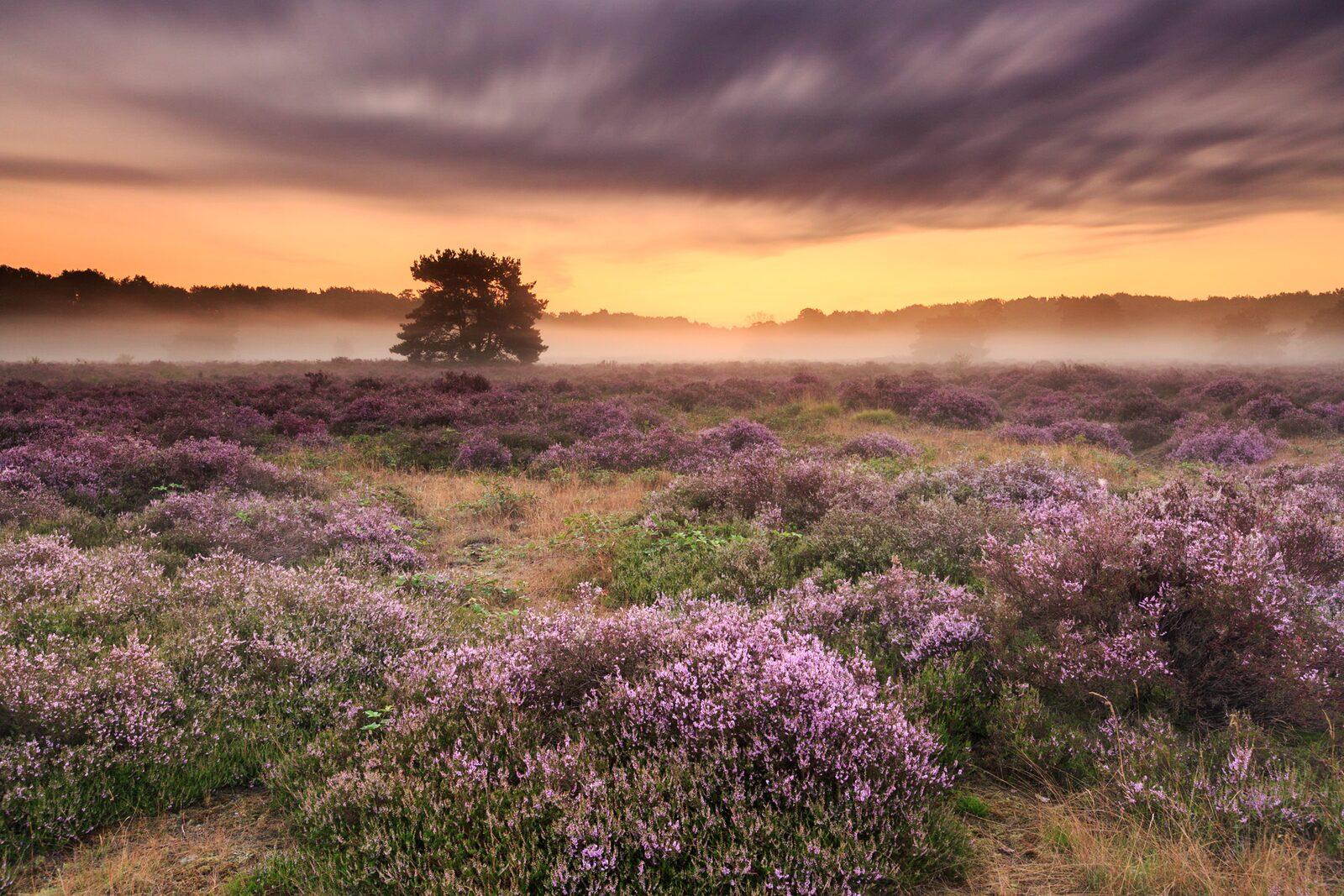 Heidevelden Maashorst