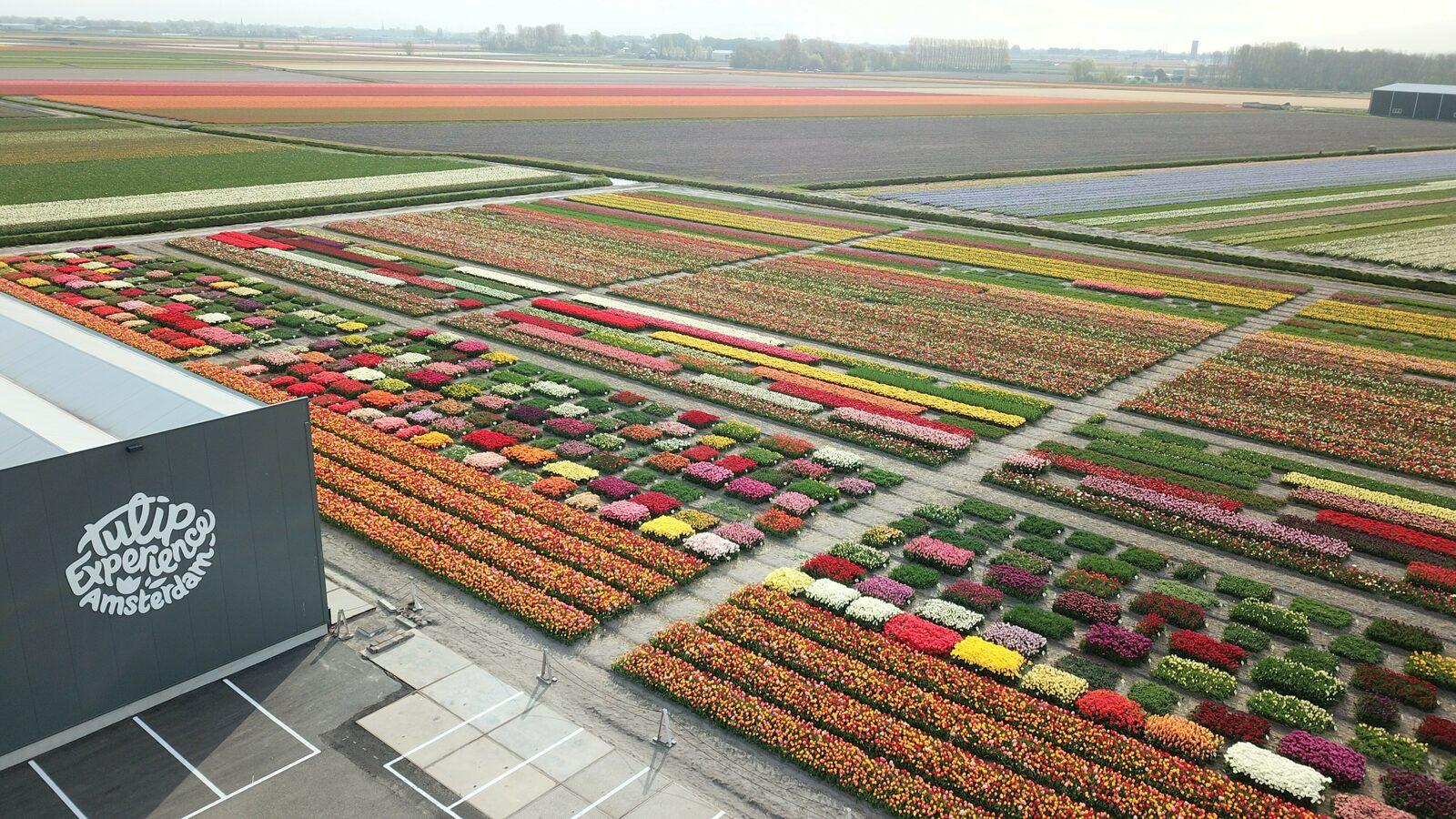 Tulpenentdeckungsreisen