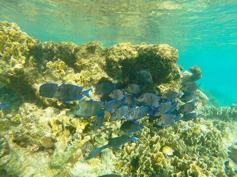 Bonaire National Marine Park
