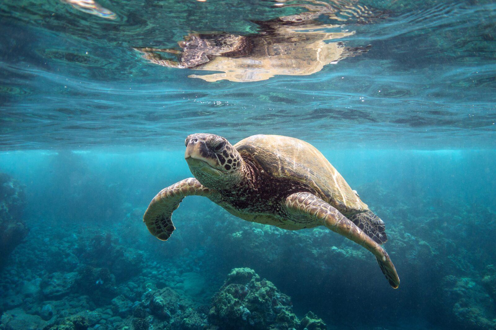 Férias de mergulho em Bonaire