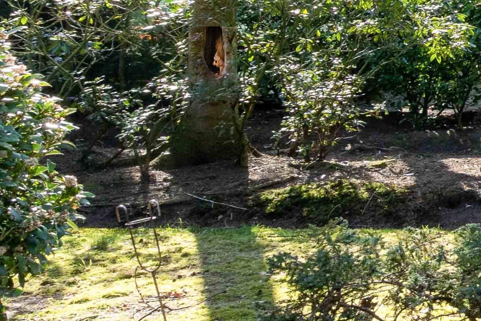 Stenen woning 12b - 13| Acaciadreef 07