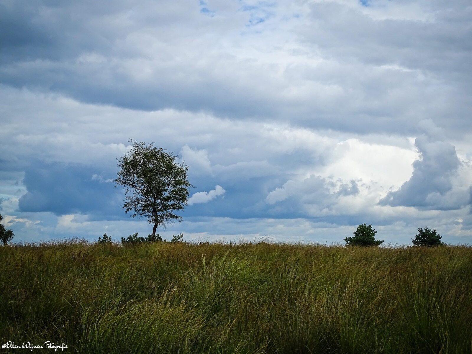 Bewolkt Natuurgebied Posbank met bomen en gras
