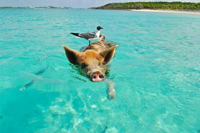 Tiere auf Bonaire