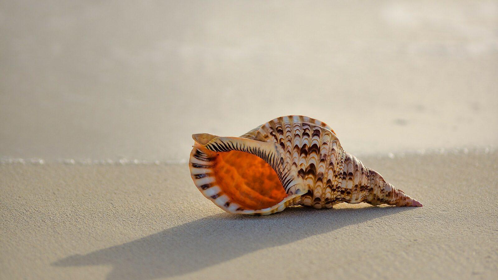 Natuur aan de kust - natuurlijke schatten - Holiday Suites