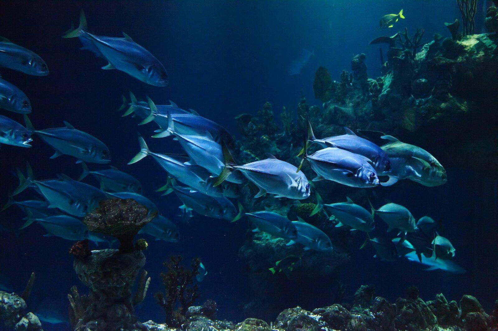 Aquarium le Septième Continent