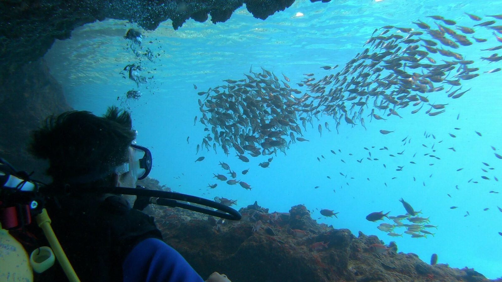 Navigation diver specialty