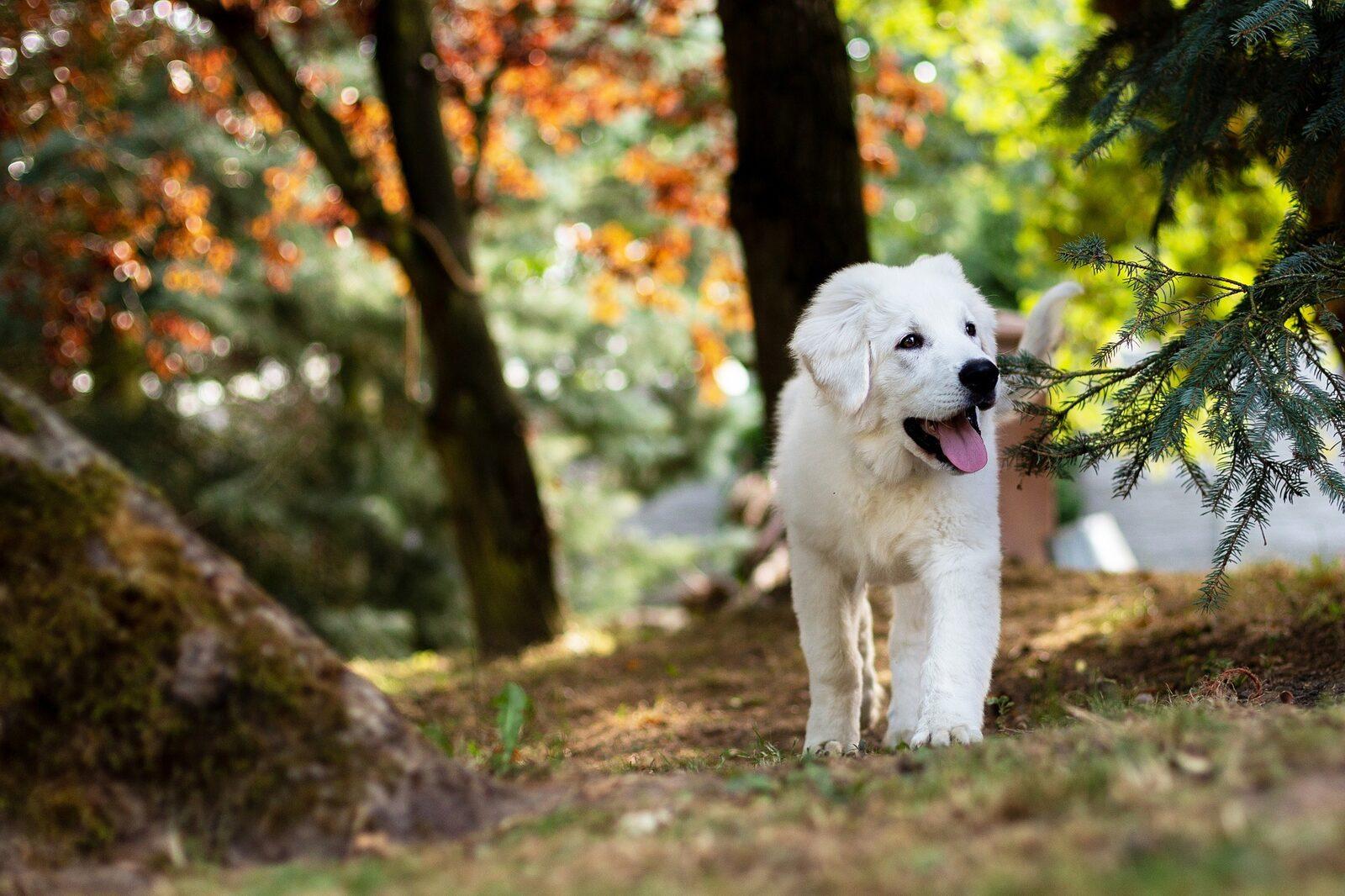 Urlaub mit Ihrem Hund in Seefeld