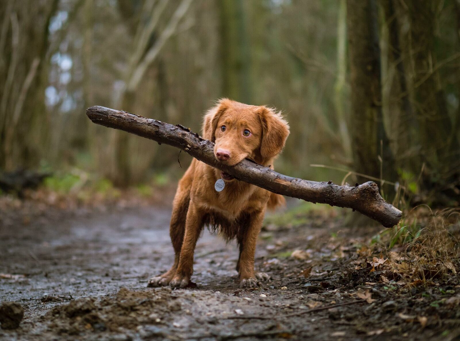Urlaub Limburg mit Hund