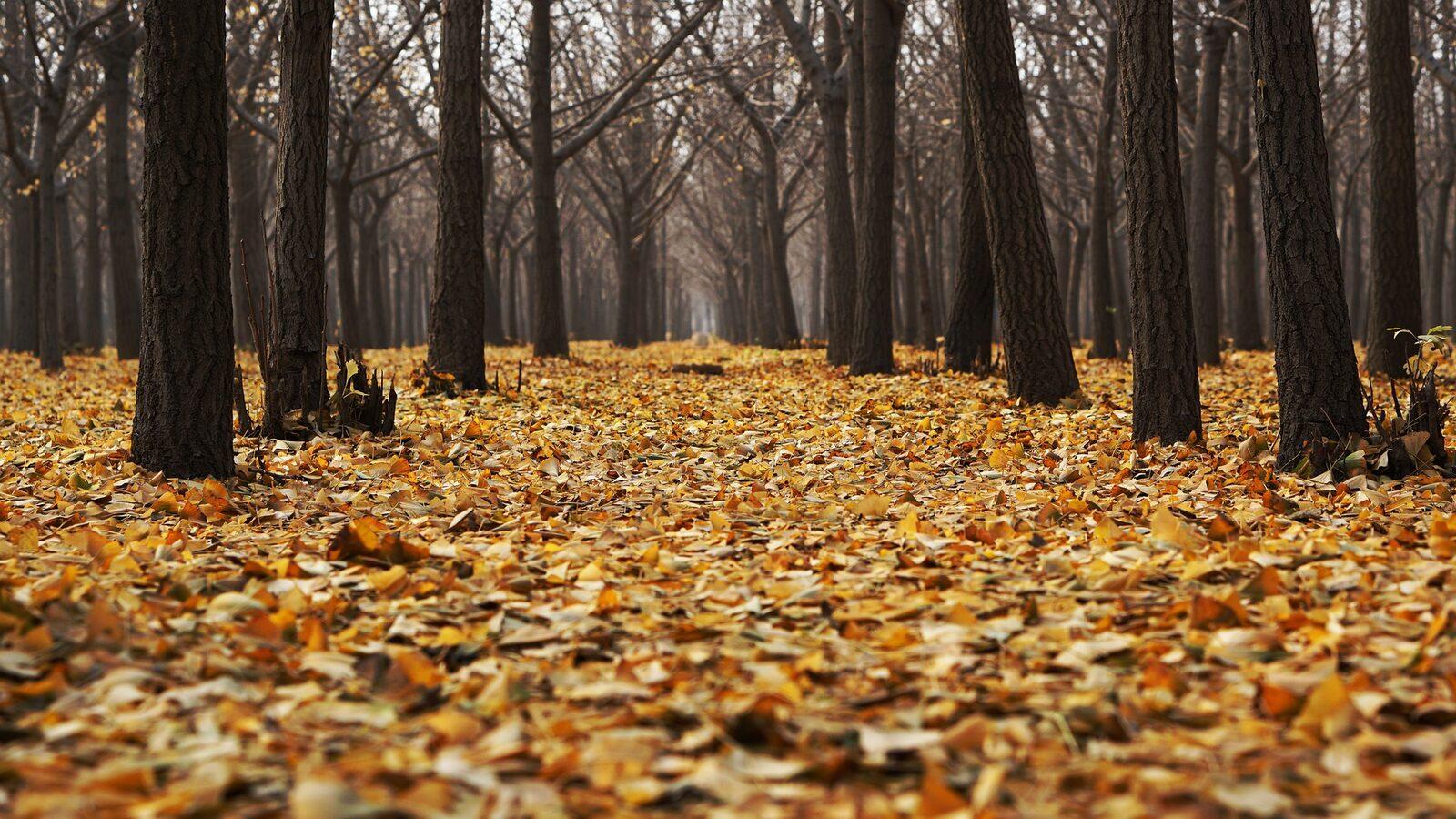 Autumn holidays Brabant