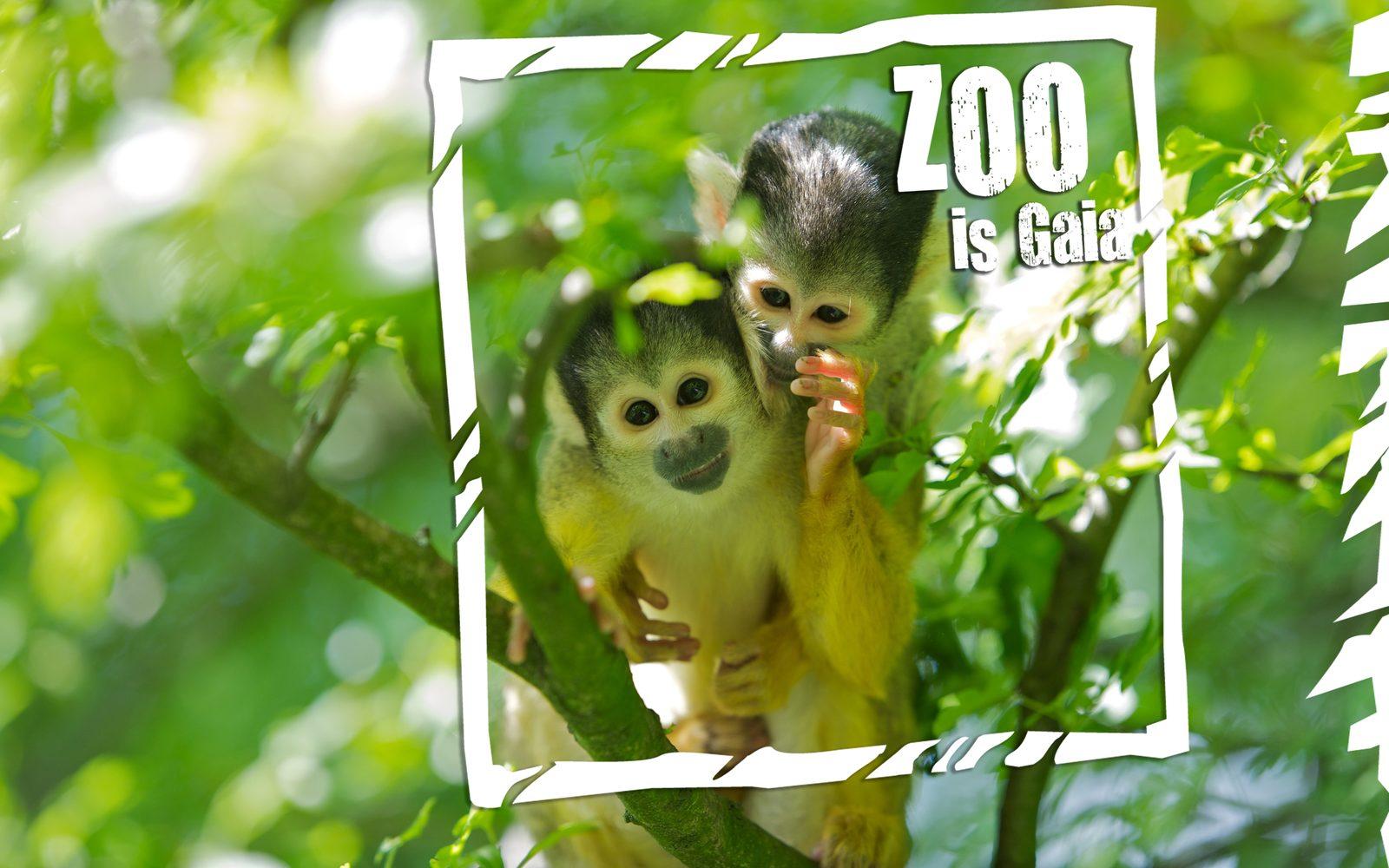 Gaia Zoo - arrangement