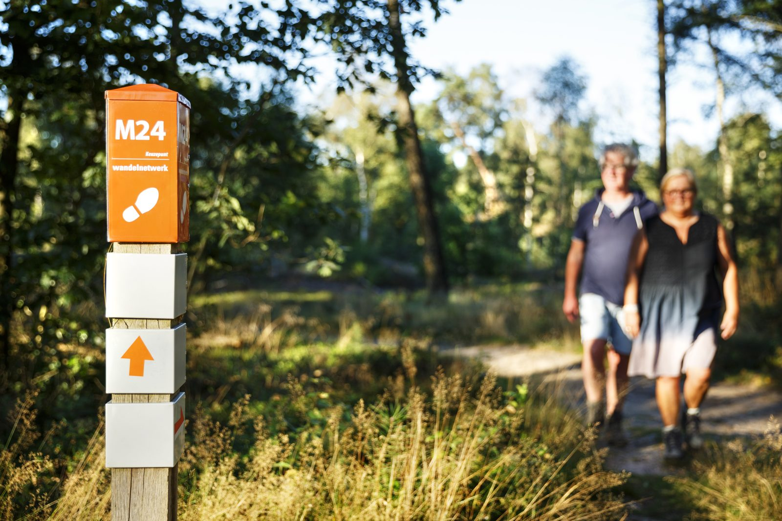 Wandern in Holten Holterberg Salland Ridge