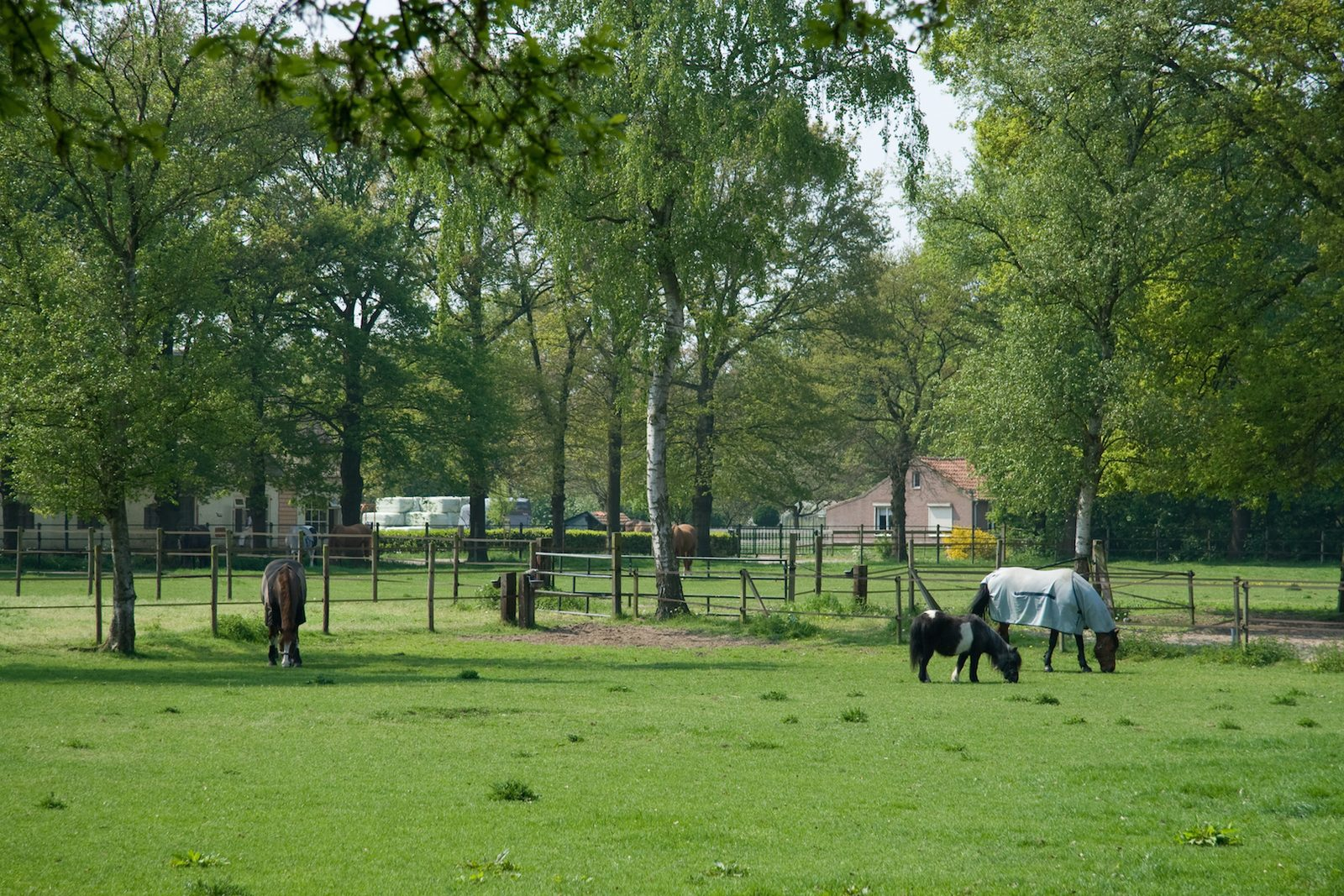 Because of the convenient location of our holiday park you will never be bored.