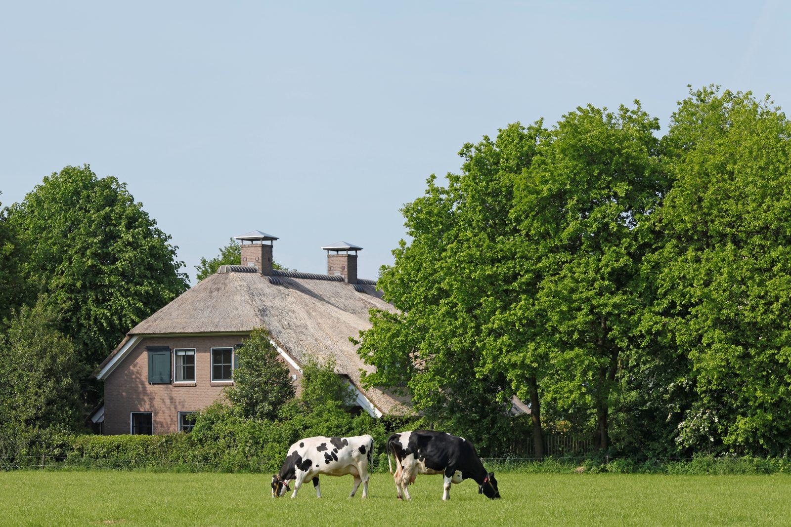 Grote vakantiehuizen in Nederland voor een familie- of vriendenweekend
