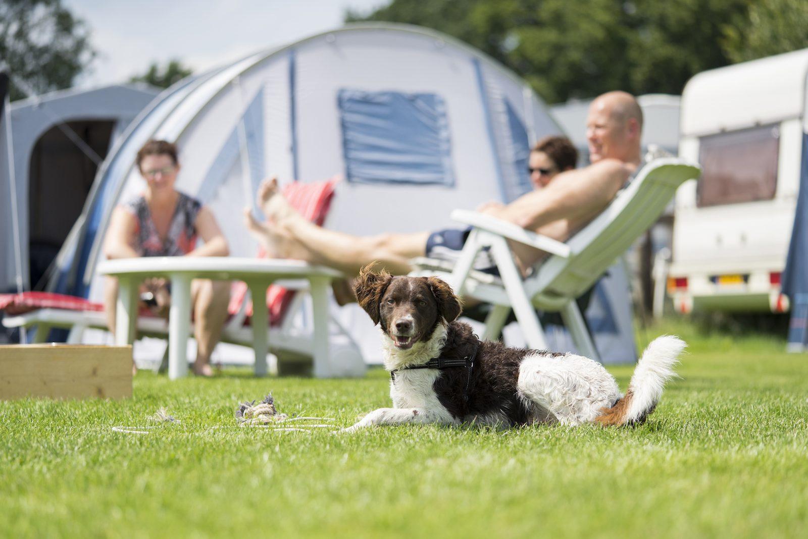 Haustier-freundliche camping