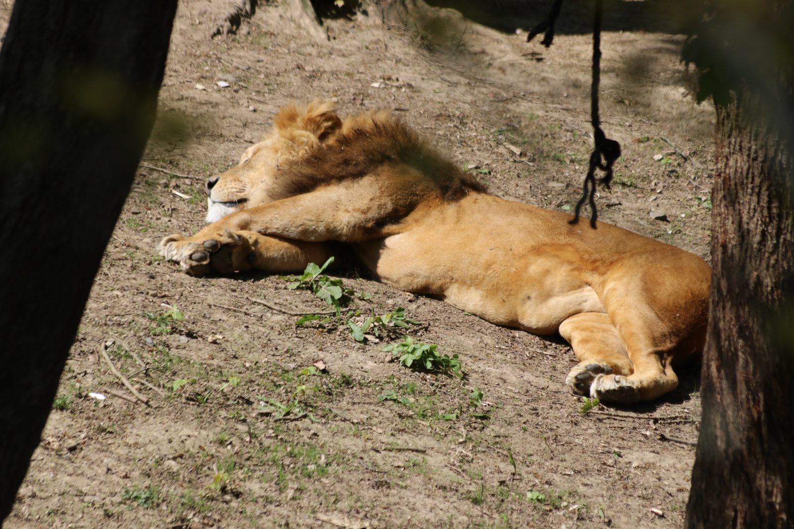 Gaia Zoo Package