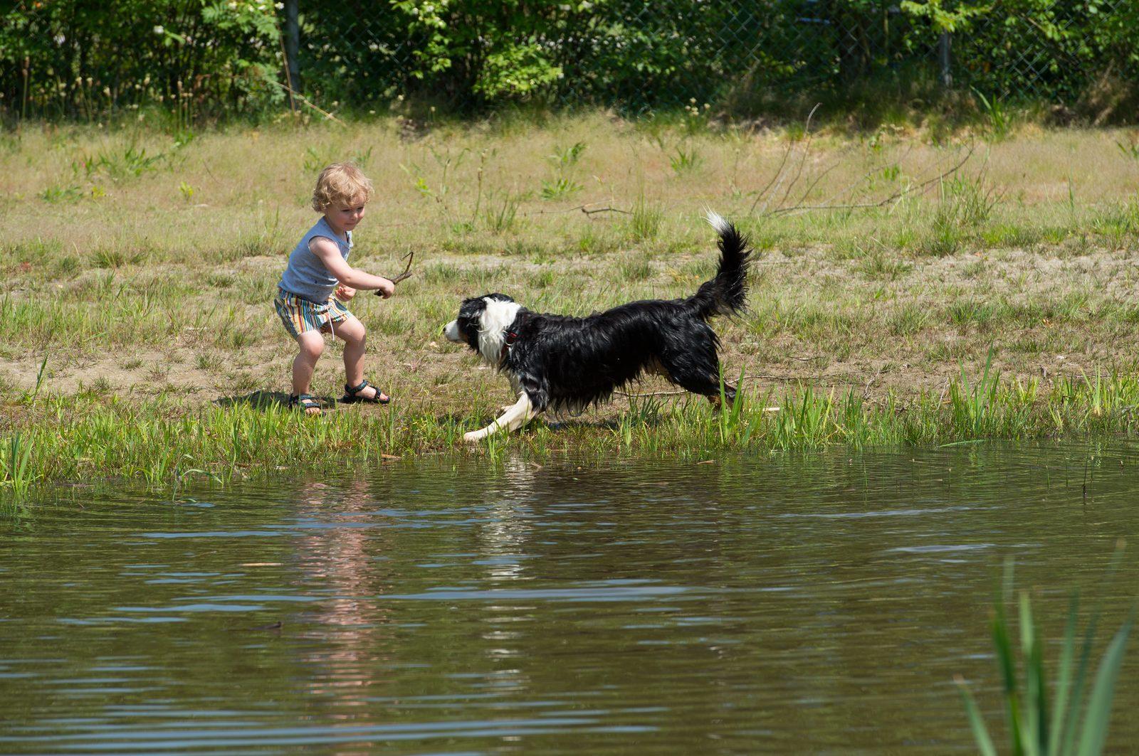 Camping Overijssel met hond