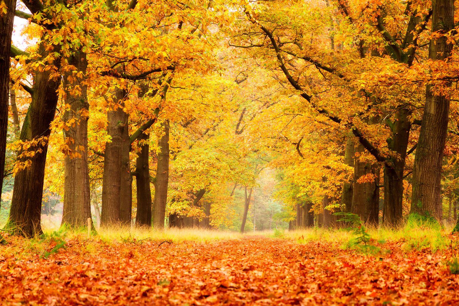 Blog - Herfst op de Veluwe
