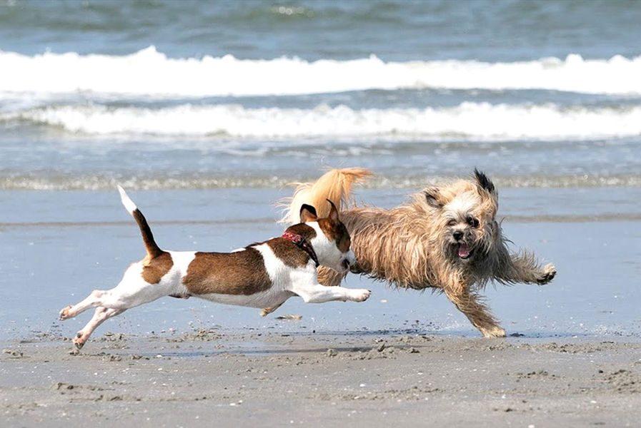 Vakantiehuis Zeeland met hond