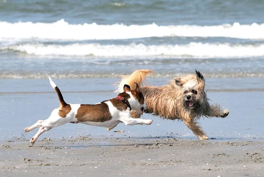 Holiday home Zeeland with dog