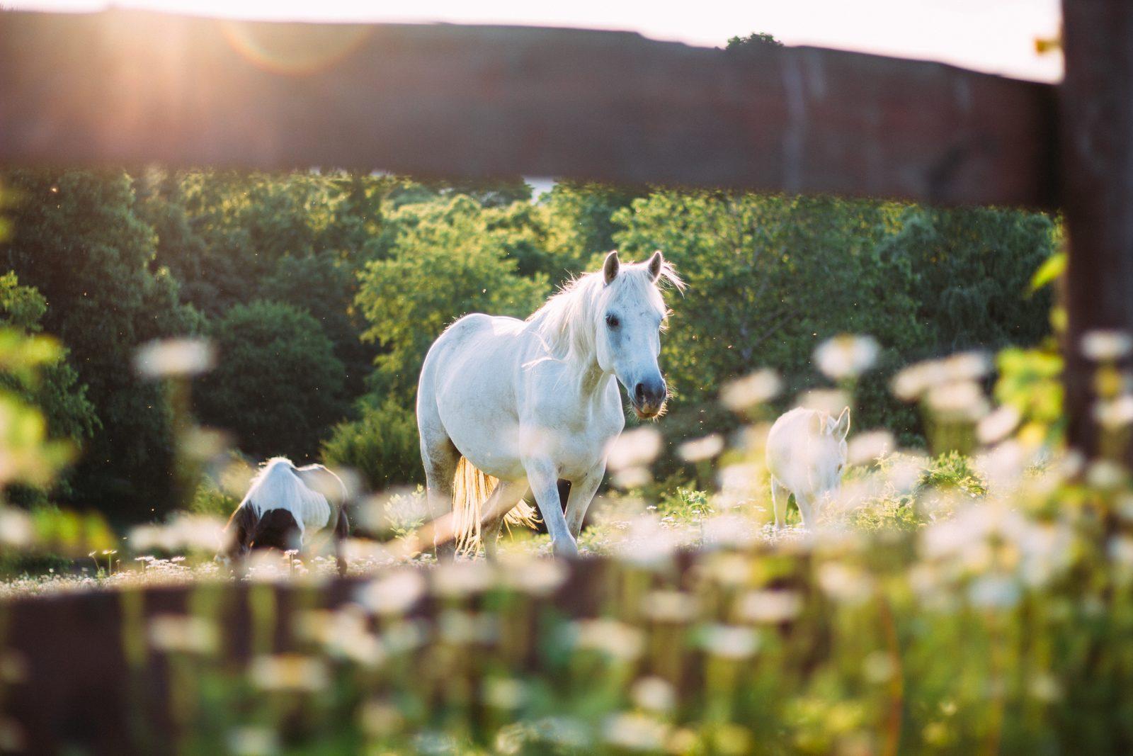 Neem je paard mee op vakantie