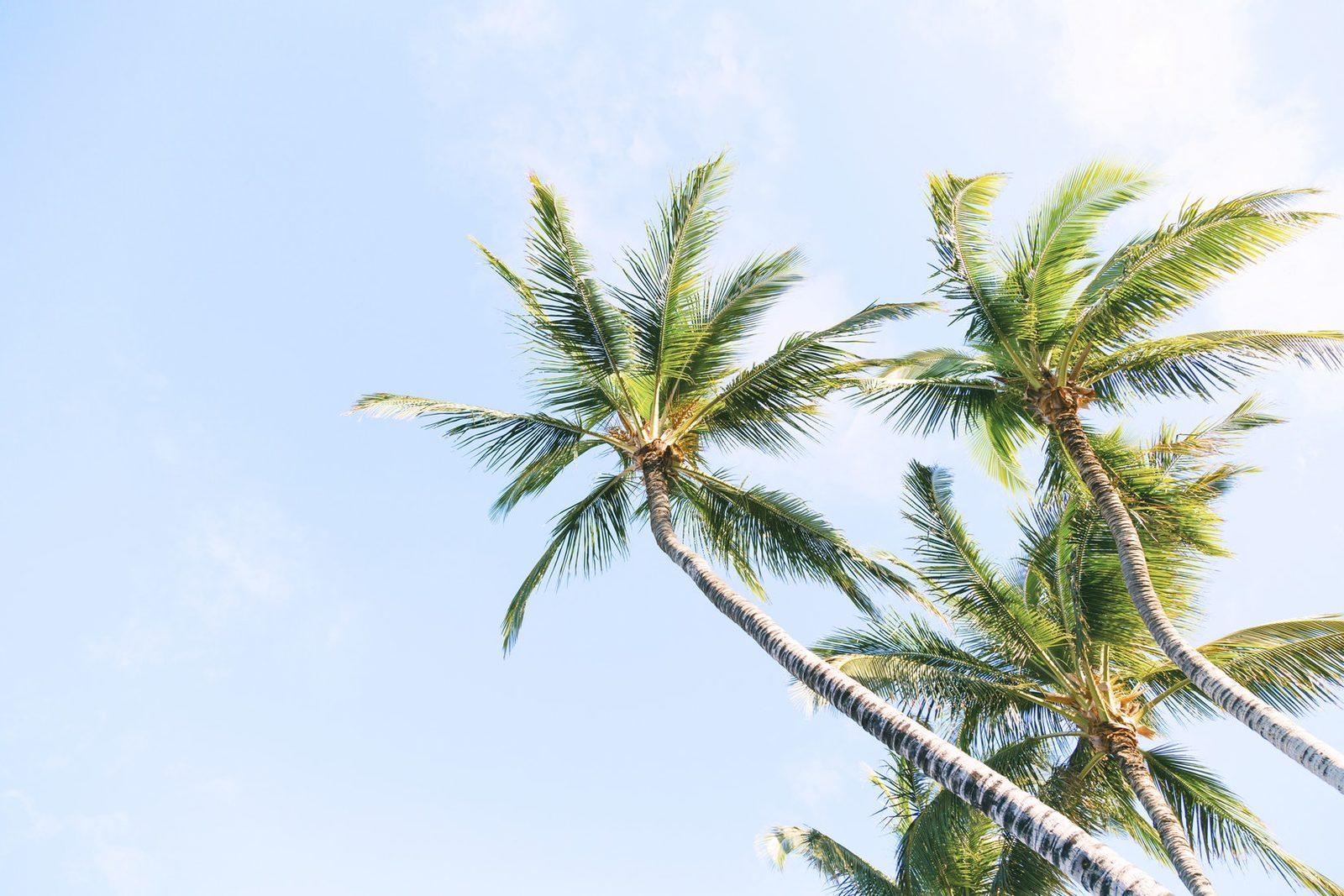 Bonaire travel
