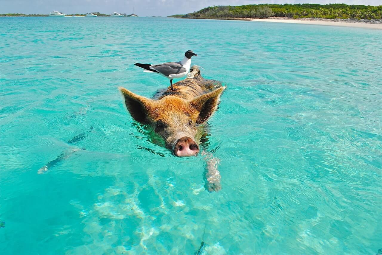 A vida animal de Bonaire é tanto aquática como terrestre. Irá com certeza encontrar belas criaturas nesta ilha.