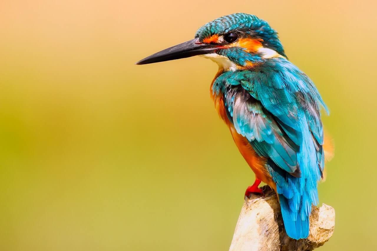 Dieren op Bonaire; van vogels tot grote reptielen. U vindt de prachtige schepsels overal op het eiland, maak kennis met de dieren van Bonaire.