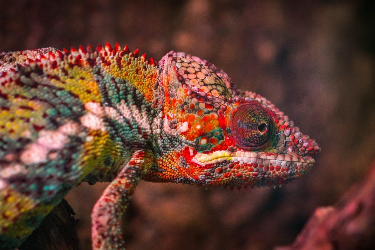 De hagedis is een dier op Bonaire. Houd je camera in de aanslag om de dieren op Bonaire te fotograferen. Kleine en grote hagedissen zijn leuk!