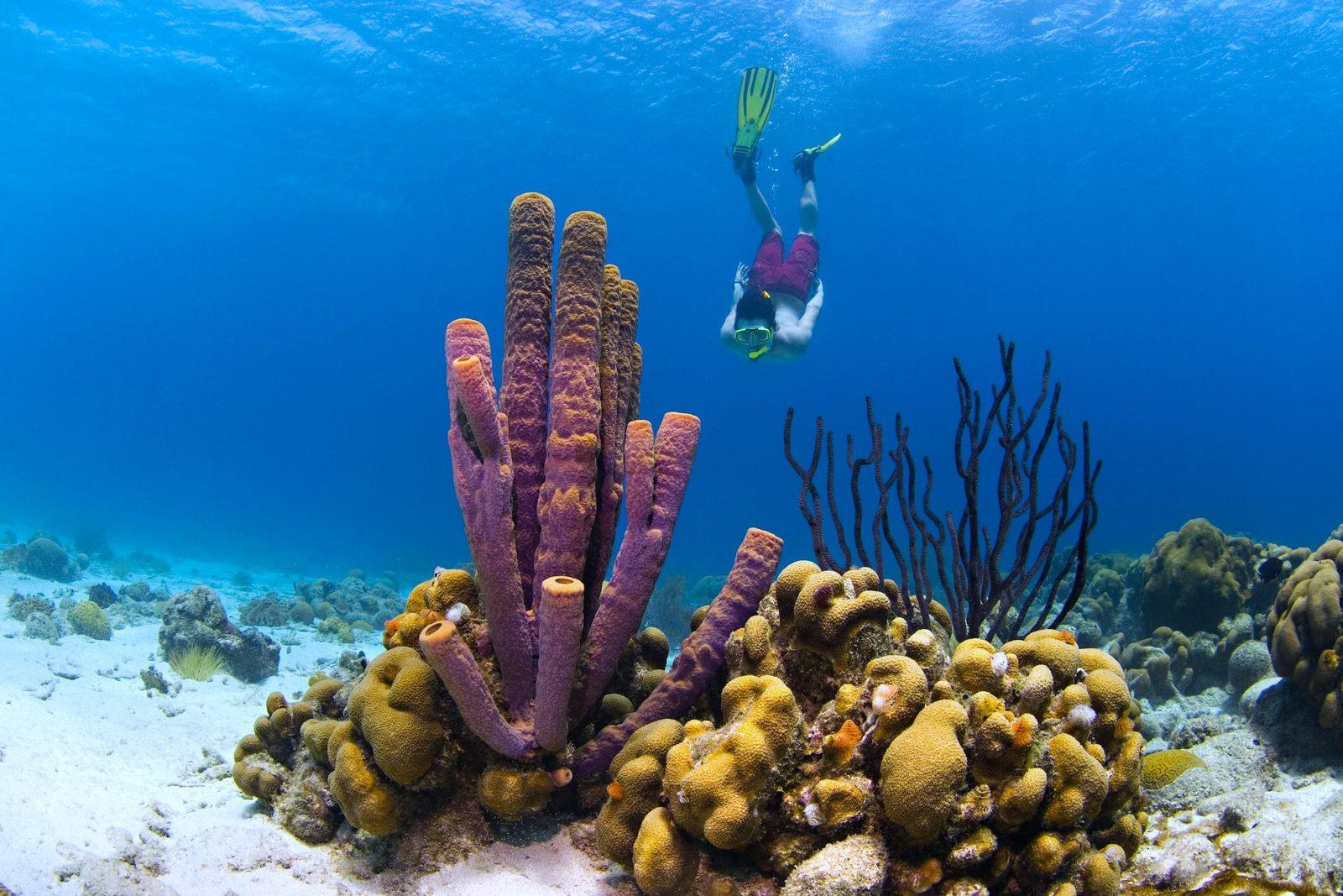Snorkelen Curaçao