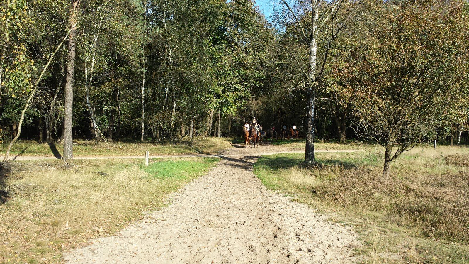 Horseback riding on holiday