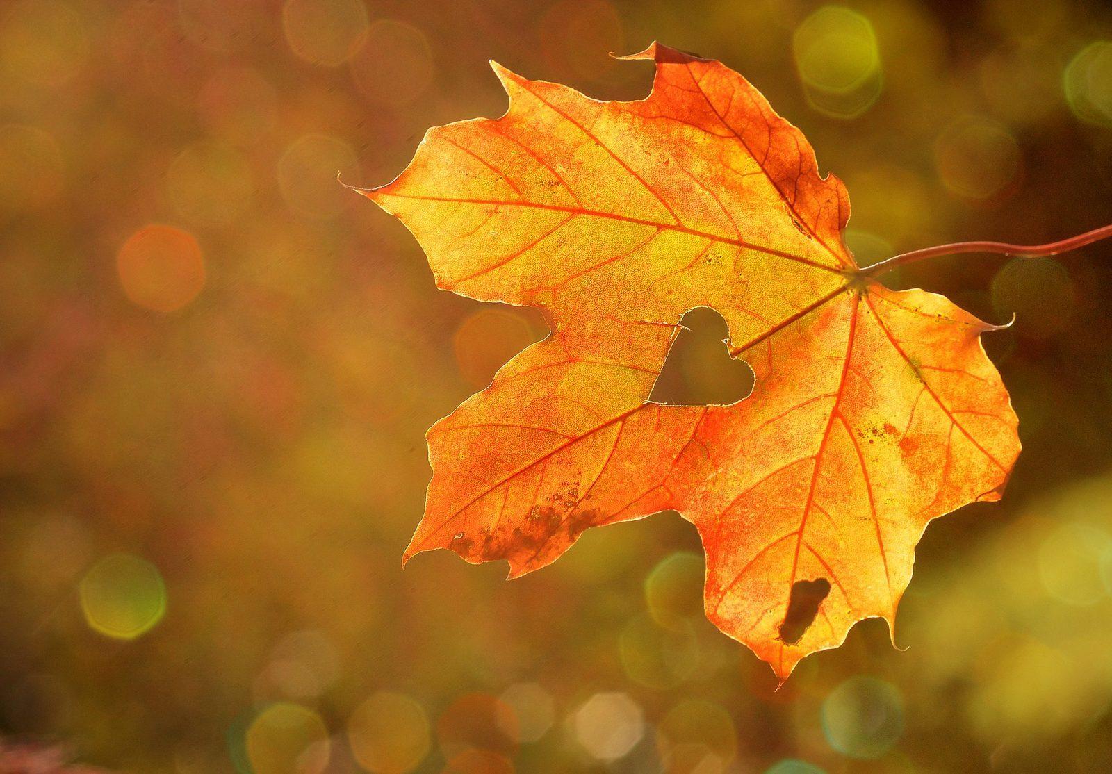 Herfst op Ackersate