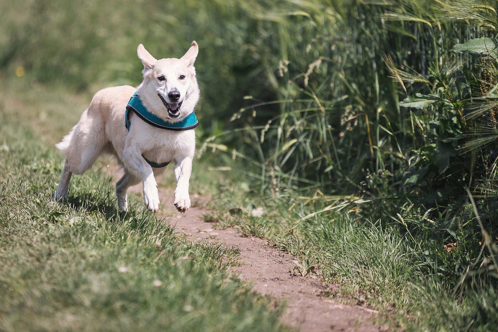 Honden losloopgebieden op de Veluwe