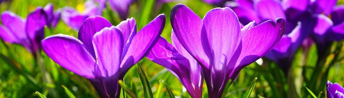 Spring holidays Holiday Park De Lochemse Berg
