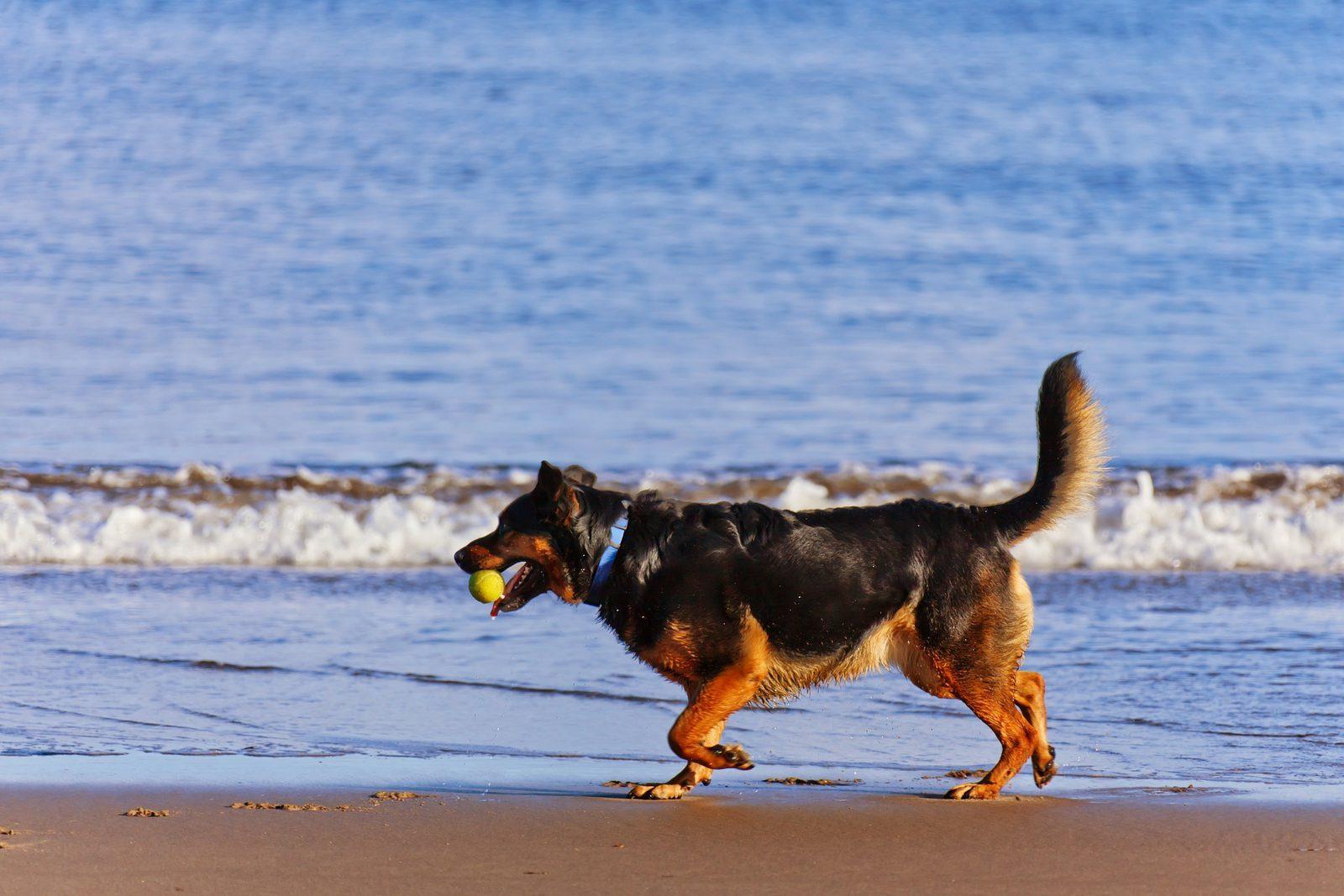 Op vakantie met uw hond(en)