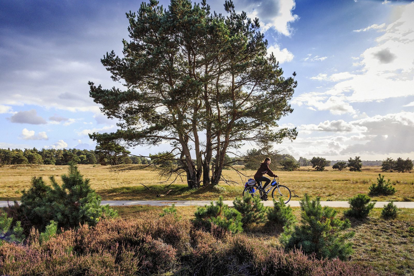 Cycling through De Hoge Veluwe National Park