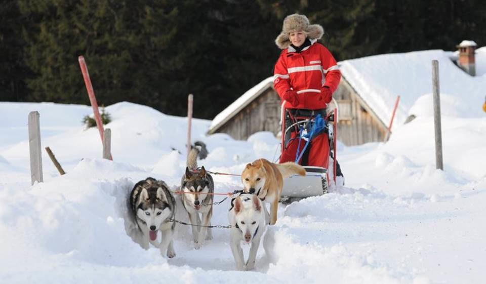Hondenslee avonturen