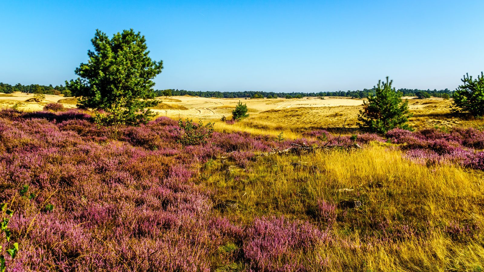 Gelderland most popular province among tourists