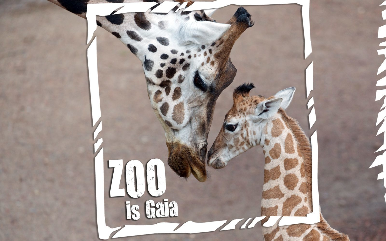 GaiaZoo