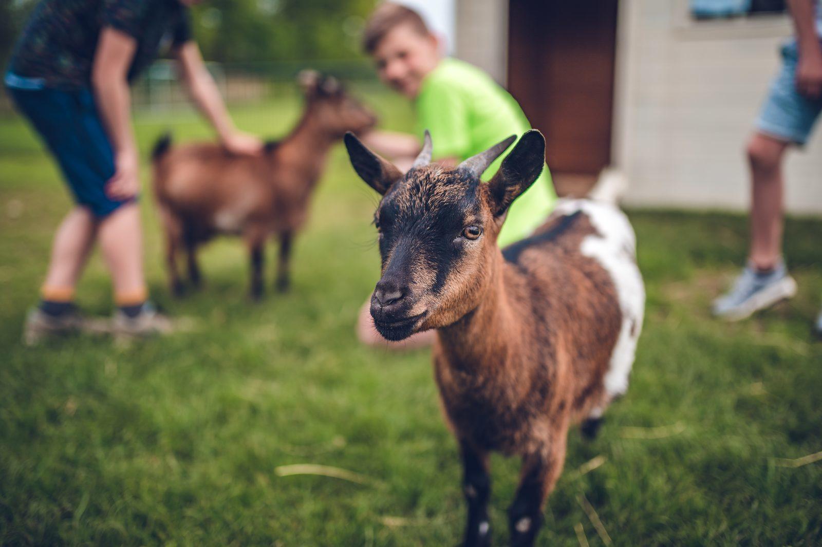 Animal pasture