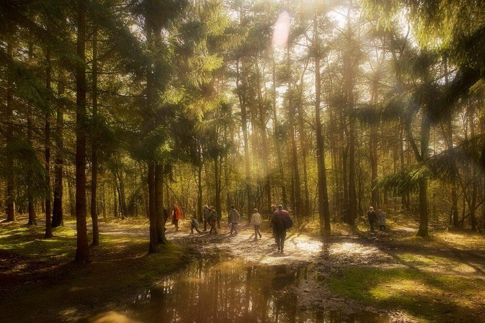 Parc National de la Haute Campine Park Hoge Kempen