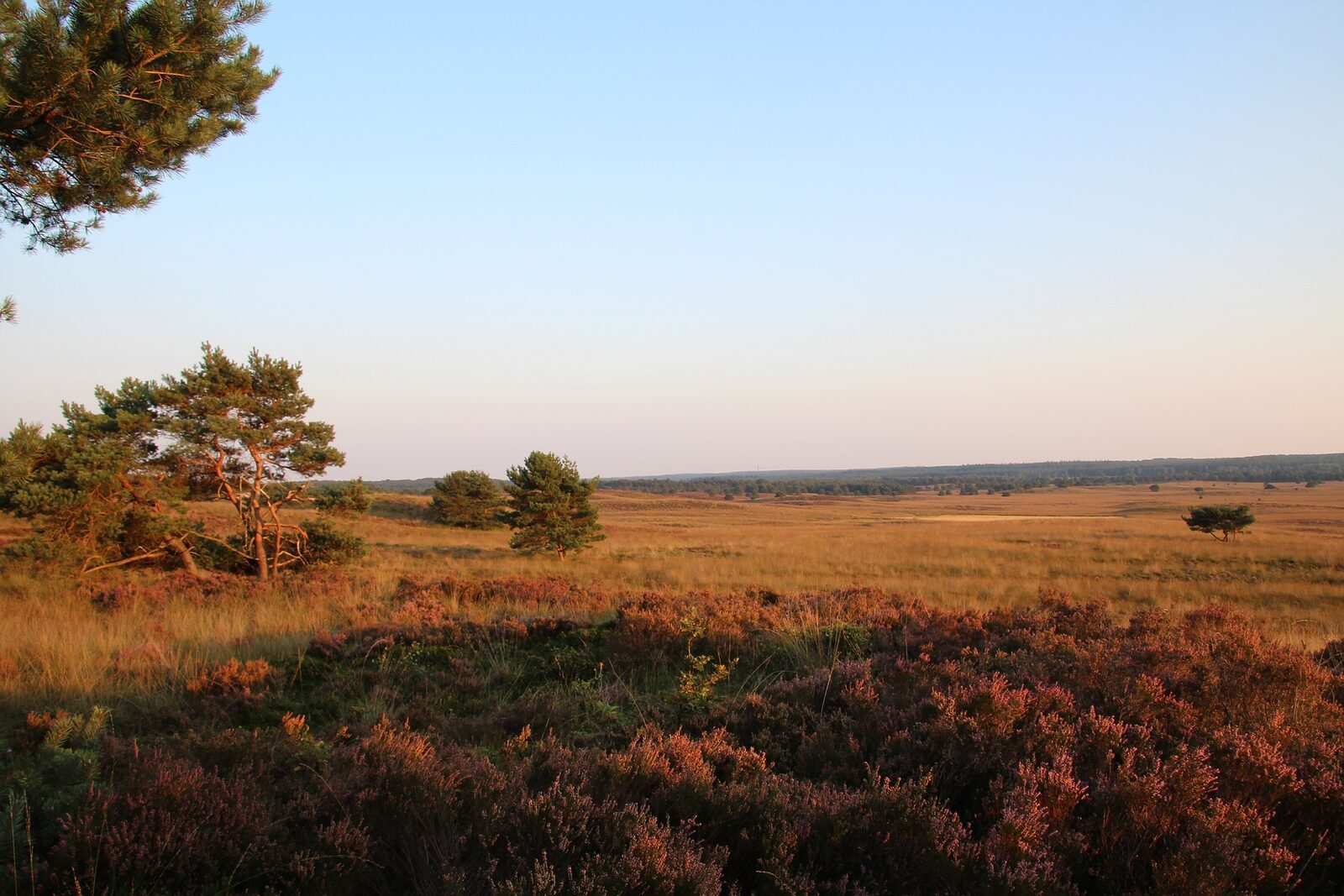 Autumn holiday Veluwe