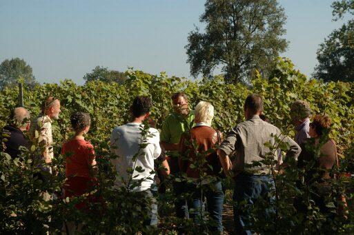 De Tappenmars Vineyard