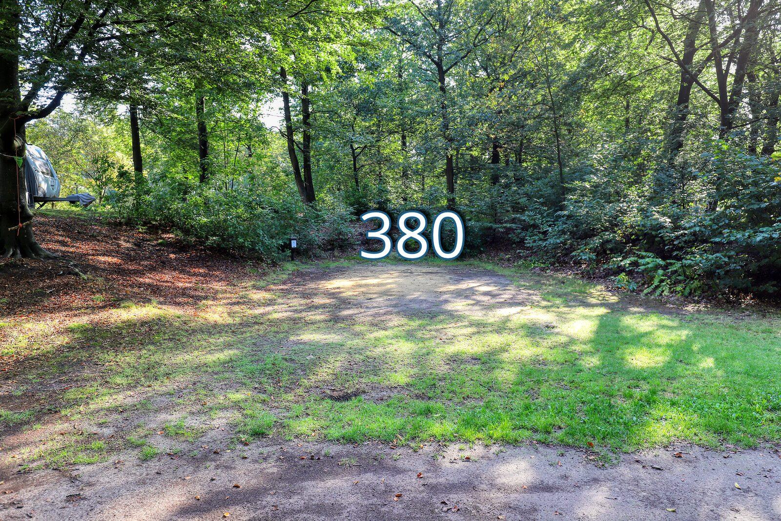 top 20 houtduif 380