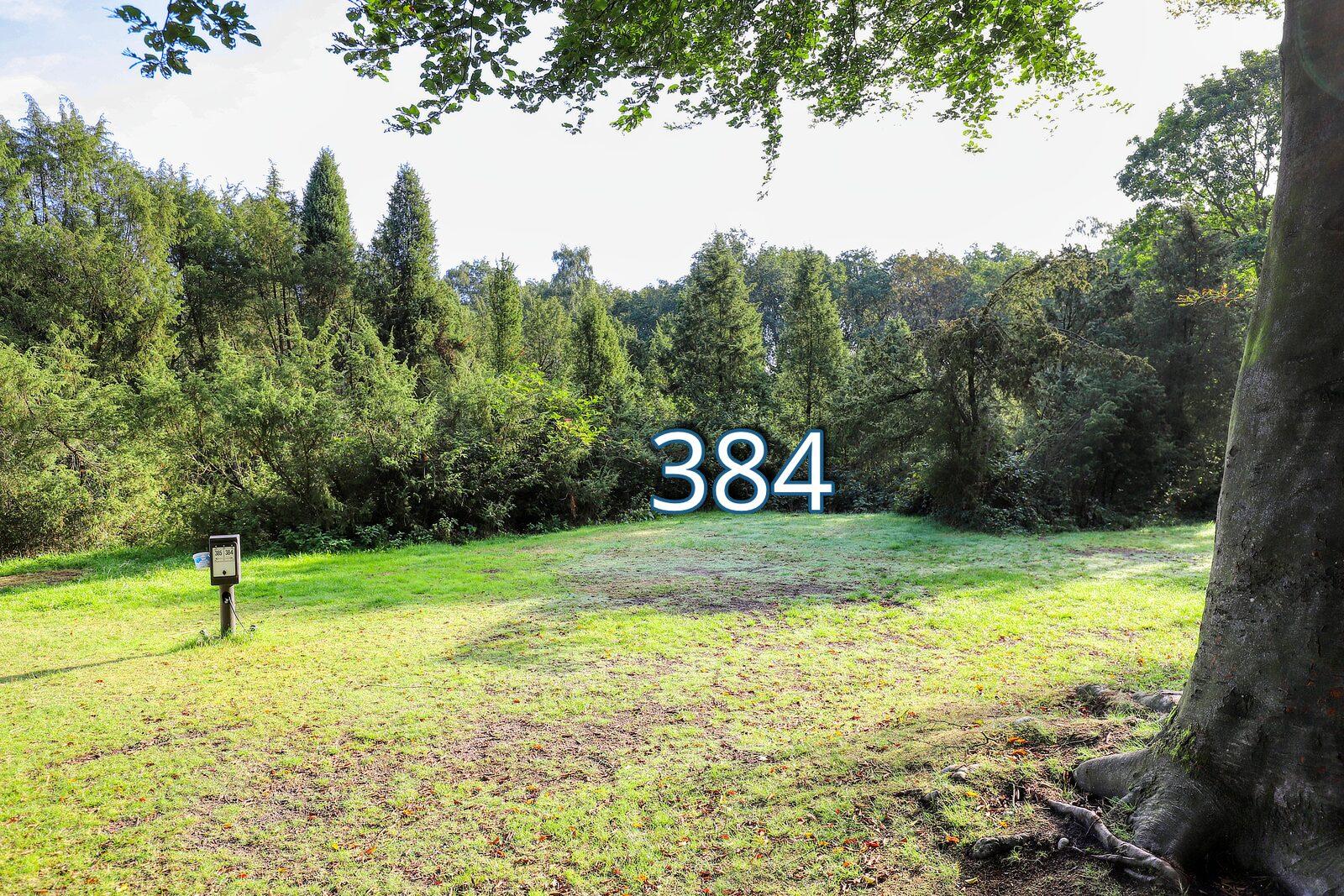 houtduif 384