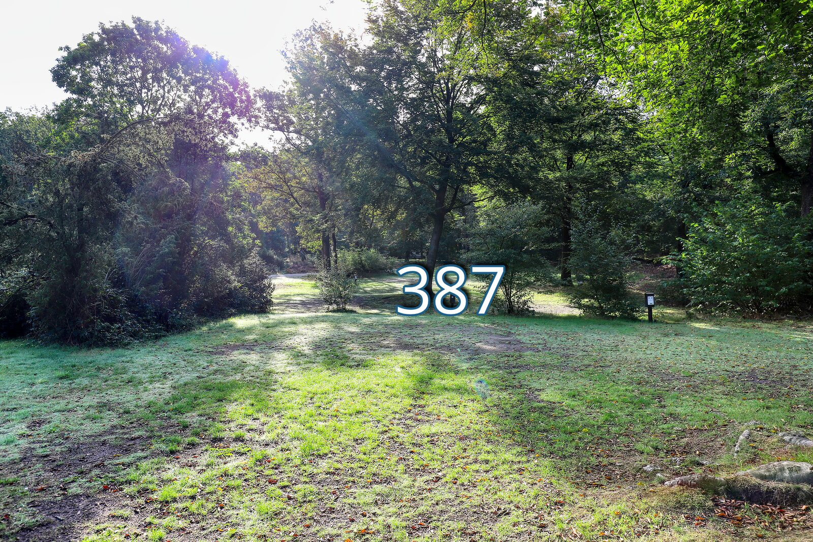 houtduif 387