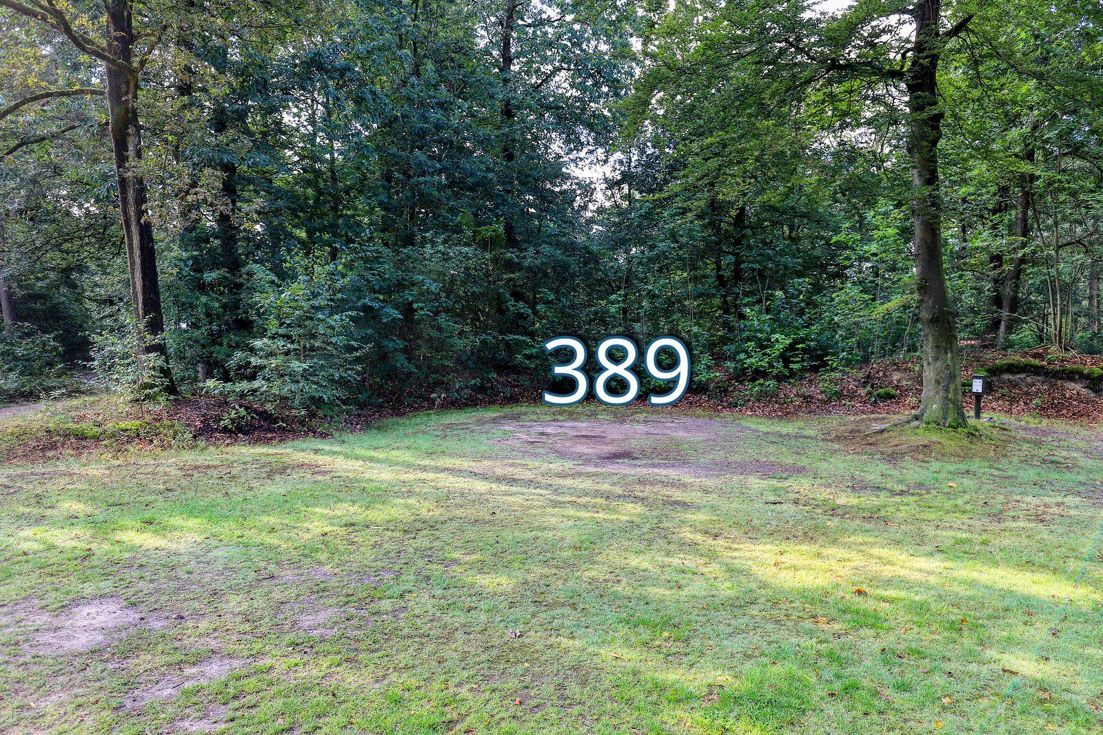 houtduif 389