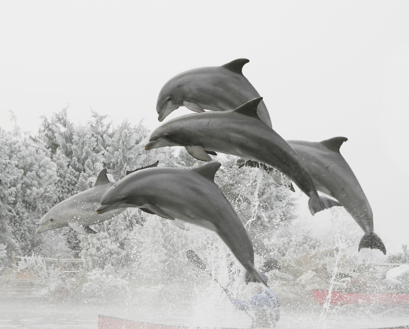 Winter in het Dolfinarium