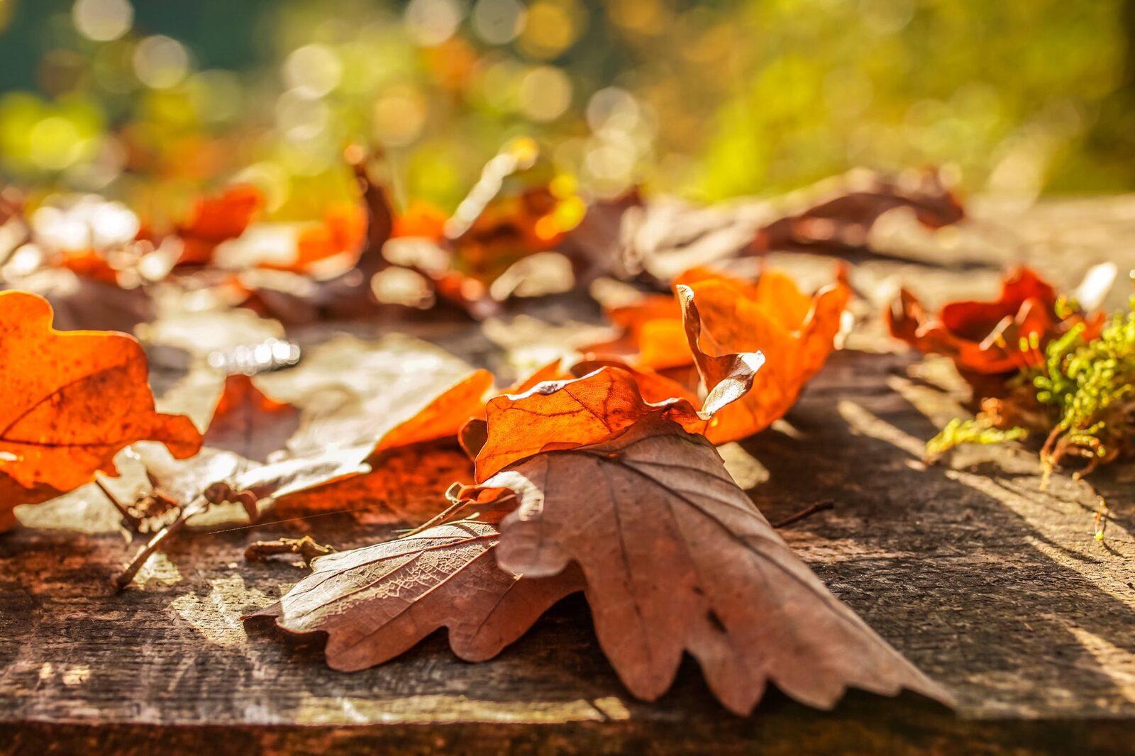 Herbsturlaub in Zeeland